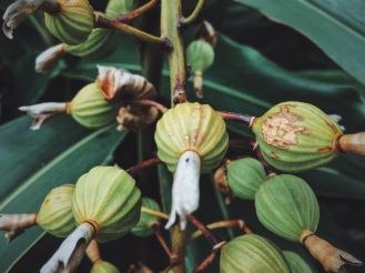 西表島 Iriomote Road Flourish Plants